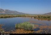 از بیتدبیری مدیرکل محیطزیست کردستان تا مرگ تدریجی دریاچه زریبار مریوان+تصاویر