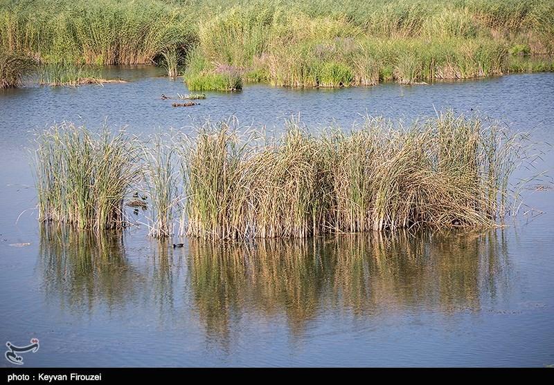 مسئولان پاسخگو باشند؛ آیا برنامهای برای نجات دریاچه زریبار مریوان از مرگ تدریجی دارید؟
