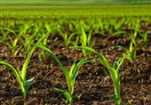 طرحهای نوین کشاورزی در استان مرکزی تدوین و اجرا شود