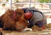 پیرترین شیر جهان در شیراز جان سپرد / سن داریوش، رکورد است؟