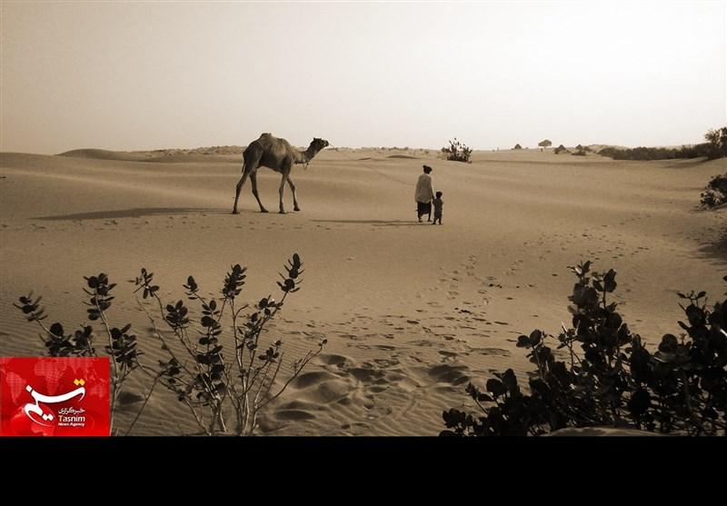 صحرائے تھر کے منفرد مناظر