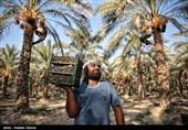 «معجزه آبخیزداری»|ضرورت توجه به کاشت درختان مثمر در آبخیزداری
