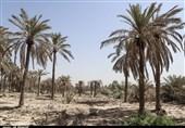 نخیلات خوزستان در انتظار تعیین حقآبه تابستان