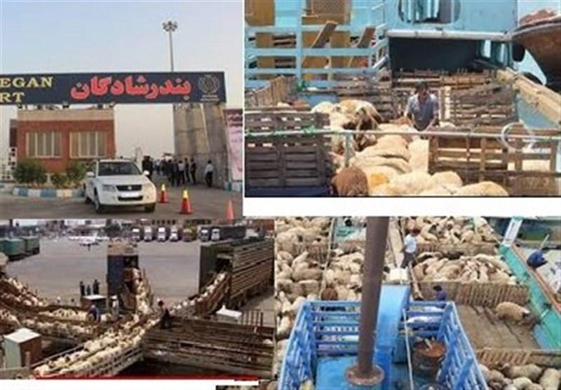 صادرات دام زنده همچنان ممنوع است/ دامهای در قرنطینه صادر شدند + اسناد
