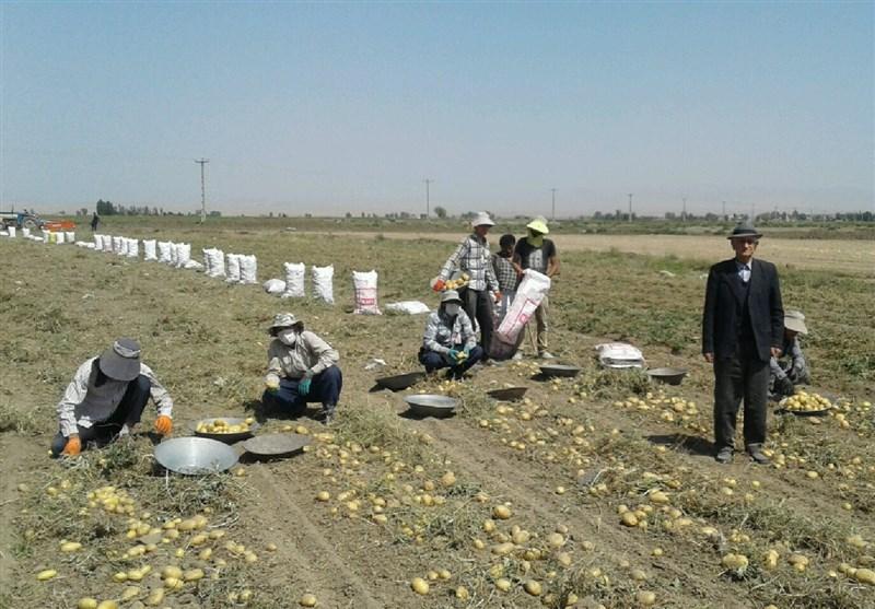 کشاورزان سیبزمینیکار اردبیلی سیاستهای اقتصاد مقاومتی را عملا محقق کردند+فیلم