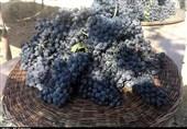 دومین جشنواره ملی انگور سیاه سردشت به روایت تصویر