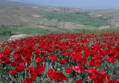 باغدار بیمبالات منطقه حفاظت شده سرخآباد زنجان را به آتش کشید