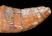 آمادگی ایران برای پیگیری فسیل دایناسور ایرانی در موزه برزیل