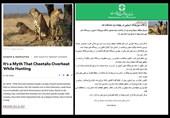 گاف یوزپلنگی روابط عمومی سازمان حفاظت محیط زیست