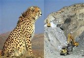 موافقت سازمان محیط زیست با اکتشاف معدن در زیستگاه یوز