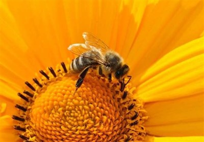 Bees Help Researchers Confirm Theory about Maintaining Protective Clumps under Tough Conditions (+Video)