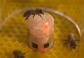 Scientists Develop New Technologies to Interact with Bees (+Video)