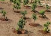گرین پاکستان: سندھ میں موٹر وے پولیس نے 7300 پودے لگائے
