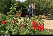 دومین باغ گیاهشناسی مشهد همزمان با نوروز 98 به بهره برداری میرسد