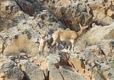 Shirahmad Wildlife Refuge in Sabzevar
