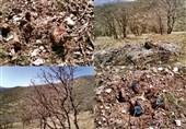 46 درصد جنگلهای لرستان دچار زوال بلوط؛ اعتبار مقابله با زوال بلوط تخصیص نیافت