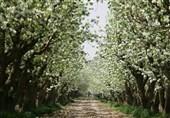 ماجرای تخریب باغی که منبع اکسیژن کرج است