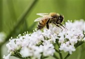 Study: Mushroom Extract Could Help Save Bees from Virus