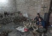 آذربایجانغربی| مجسمهسازان کارآفرین سلماس در معرض سرطان و امراض ریوی