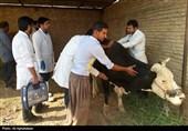 گزارش تصویری از هشتمین اردو جهادی دامپزشکی دانشگاه شهید چمران اهواز