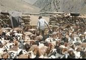 عشایر استان اردبیل از 132 میلیارد ریال تسهیلات دامپروری برخوردار میشوند