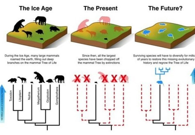 Scientists Warn Extinction Now Outpaces Evolution