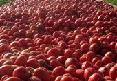 گرانی گوجه ادامهدار شد + لیست نرخ انواع میوه