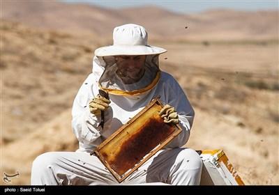 زنبورداری در خراسان شمالی