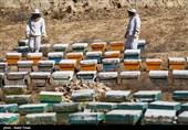 """""""کردستان"""" قطب تولید عسل مرغوب ایران؛ عزمِجزمِ تولیدکنندگان عسل برای رونق تولید داخلی"""