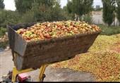 مشکل انباشت سیب صنعتی در جادههای آذربایجان غربی حلشدنی نیست؟
