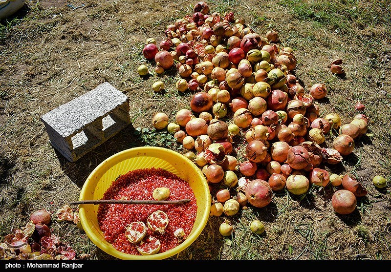 Pomegranate Festival Held in Iranian Northern Village