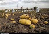 «صادرات» عامل اصلی افزایش قیمت سیب زمینی در چهارمحال و بختیاری است