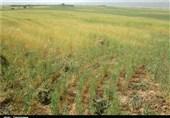 مشکلات زیادی در حوزه کشاورزی کردستان داریم