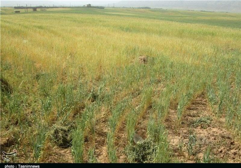 3000 میلیارد تومان در بخش آب، خاک و کشاورزی اردبیل هزینه میشود+فیلم