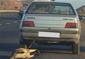 متهم آزار سگ در زنجان بازداشت شد