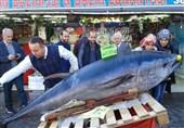 صید و فروش ماهی 290 کیلویی در آنکارا + عکس