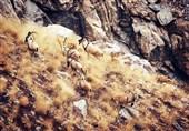 دو اثر طبیعی ملی و دو پناهگاه حیات وحش در استان همدان ثبت میشود