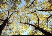 طبیعت زیبای پاییزی ارومیه+فیلم