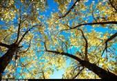 جذابیتهای گردشگری پاییزی در طبیعت ارومیه + تصاویر