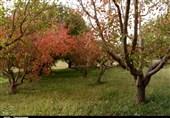 پاییز زیبای باغهای یامچی زنجان به روایت تصویر