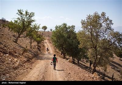 مسیر خاکی روستای پز -بخش ذلقی غربی - شهرستان الیگودرز-استان لرستان-کودکان در این روستا ها به چوپانی میپردازند و برای هر دفعه به مدت 3 روز در بیرون از خانه به سر میبرند.
