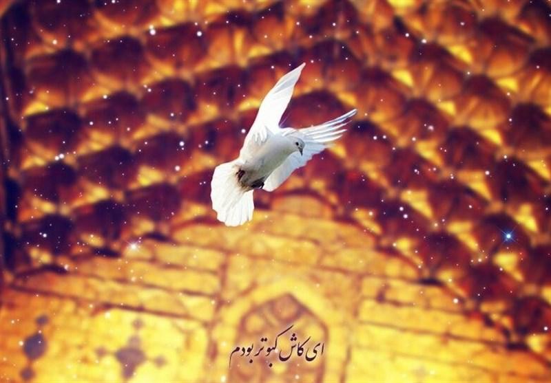 سرودهای در مدح امام رضا(ع): «شاعر به شکل کفتر گنبد در آمده است»