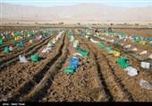 گیاهان شورزا در حدود 150 هکتار زمین کشاورزی در جنوب کشور کاشته شد