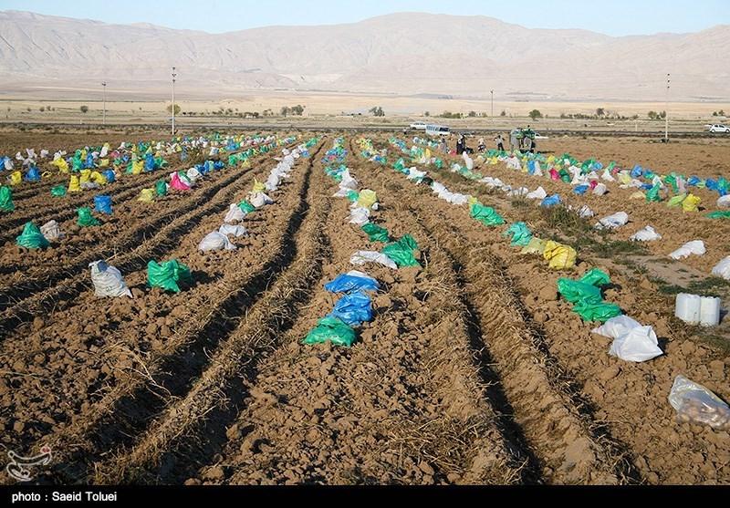 توصیههای هواشناسی کشاورزی تا 4 آذر ماه به تفکیک استان