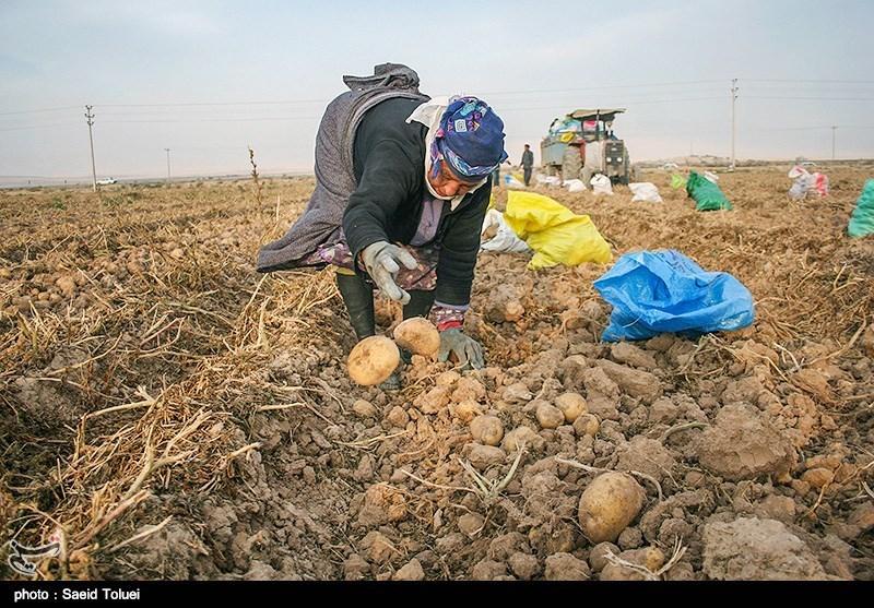 4400 فرصت شغلی در حوزههای مختلف بخش کشاورزی اردبیل ایجاد شد