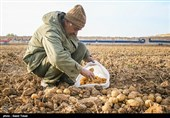اتاق بازرگانی اهواز به کشاورزان خوزستانی توجهی نمیکند