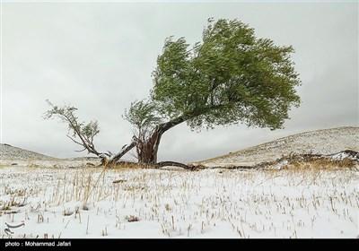 بارش برف پاییزی در ارتفاعات ارمند زنجان