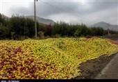آقای وزیر کشاورزی این تصاویر را ببینید
