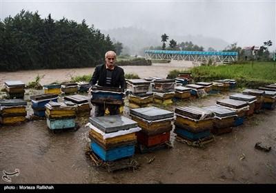 محرمعلی روحی پور 60 ساله، کندو های عسل را که بر اثر بارش شدید باران دچار خسارت شده جابجا میکند تا به جای امنی انتقال دهد. امسال اولین تجربه کندو داری اوست که با 50 میلیون وام و 38 میلیون آورده خود راه اندازی کرده، که در برآوردهای اولیه بیش از 80 درصد خسارت دیده است. روستای لات لیل املش 6 مهر 97