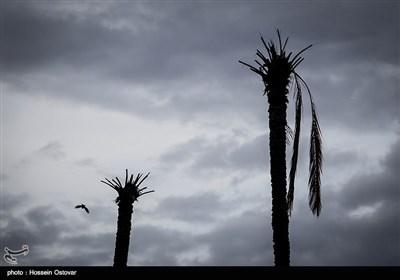 پس از باران در روستای نظر آقا - بوشهر